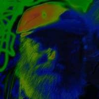 Esoteric Fool's avatar