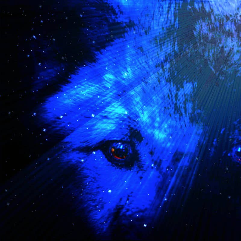 near death euphoria's avatar