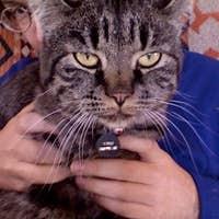 mcgumbrie's avatar
